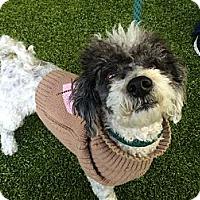 Adopt A Pet :: Barney - Mission Viejo, CA