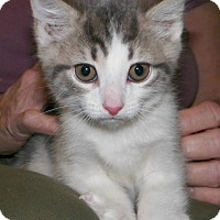 Adopt A Pet :: Yoshi - Dover, OH