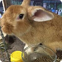 Adopt A Pet :: Quimby - Williston, FL