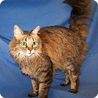 Adopt A Pet :: K-Talia2-Keela - Colorado Springs, CO