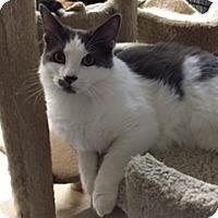 Adopt A Pet :: GRAYSON - Brea, CA