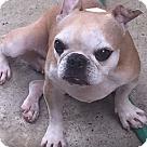 Adopt A Pet :: SanGria