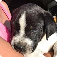 Adopt A Pet :: Wink - Quinlan, TX