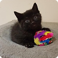 Adopt A Pet :: Scout - Adoption Pending - Richmond Hill, ON