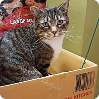 Adopt A Pet :: Peggy - Rochester, MN