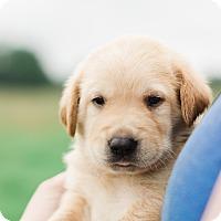 Adopt A Pet :: Leo $250 - Seneca, SC