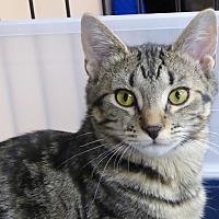 Adopt A Pet :: Mandie - Carlisle, PA