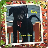 Adopt A Pet :: Rudy - siler city, NC