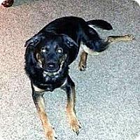 Adopt A Pet :: Corey - Evansville, IN