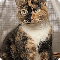 Adopt A Pet :: Tululah - Lombard, IL