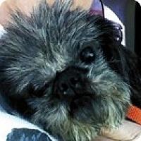 Adopt A Pet :: Mr Wiggles - Wilmington, MA