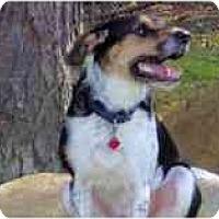 Adopt A Pet :: Rocky - Warren, NJ