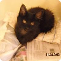 Adopt A Pet :: Piper - Riverside, RI