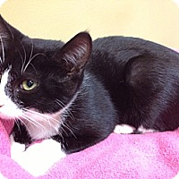 Adopt A Pet :: Sheila - Byron Center, MI