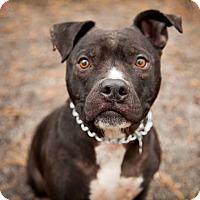 Adopt A Pet :: Benny - Tinton Falls, NJ