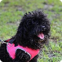 Adopt A Pet :: Oreo - Jupiter, FL
