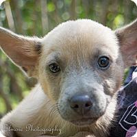 Adopt A Pet :: Wolfie - Daleville, AL