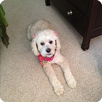 Adopt A Pet :: Ellie (COURTESY POST) - Baltimore, MD