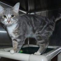 Adopt A Pet :: Whiskers - Meadow Lake, SK