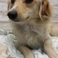 Adopt A Pet :: HOLT - Cleveland, MS
