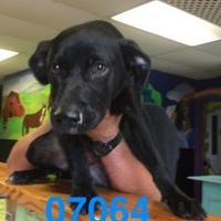 Adopt A Pet :: JASPER - Kiln, MS