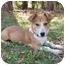 Photo 2 - Dachshund/Corgi Mix Dog for adoption in Mocksville, North Carolina - Tater