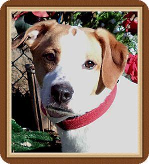 Basset Hound Mix Dog for adoption in Marietta, Georgia - KAYCEE - adopted @ off-site