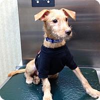 Adopt A Pet :: Finn - Brick, NJ