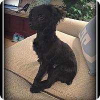 Adopt A Pet :: Teddy - Indian Trail, NC