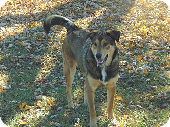 Shepherd (Unknown Type) Mix Dog for adoption in Greeneville, Tennessee - Lucy