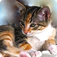 Adopt A Pet :: Ricotta (Ricki) - Davis, CA