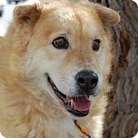 Adopt A Pet :: Ken - Las Vegas, NV