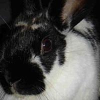 Adopt A Pet :: A1688334 - Los Angeles, CA