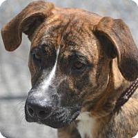 Adopt A Pet :: Cameron - Columbia, MD