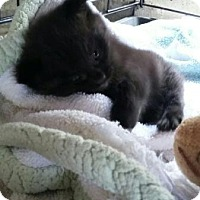 Adopt A Pet :: Percy - Libertyville, IL