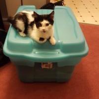 Adopt A Pet :: Spencer - Saskatoon, SK