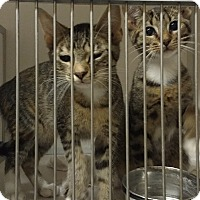 Adopt A Pet :: 394 - Cannelton, IN