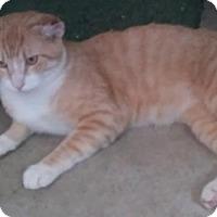 Adopt A Pet :: Ernie - Columbus, OH