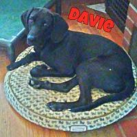 Adopt A Pet :: Davie - WESTMINSTER, MD