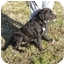 Photo 2 - Labrador Retriever Mix Dog for adoption in Graysville, Tennessee - Ricky Bobby
