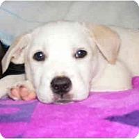 Adopt A Pet :: Bonnie-pending! - kennebunkport, ME