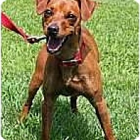 Adopt A Pet :: Tad - Minneapolis, MN