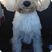 Adopt A Pet :: Henley - Oceanside, CA