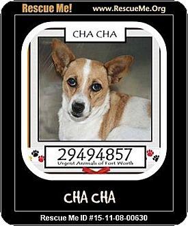 Corgi Mix Dog for adoption in Saddle Brook, New Jersey - CHACHA