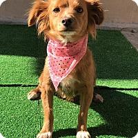 Adopt A Pet :: Sally - San Diego, CA