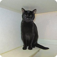 Adopt A Pet :: Batman - Grand Junction, CO