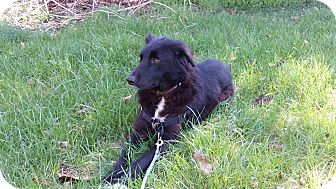 Collie Mix Dog for adoption in WESTMINSTER, Maryland - Sally