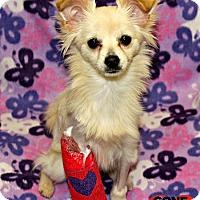Adopt A Pet :: Su Baru - Redondo Beach, CA