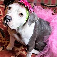 Adopt A Pet :: LULA - Knoxville, TN