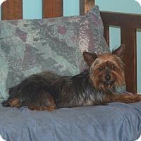 Adopt A Pet :: Molly - Prole, IA